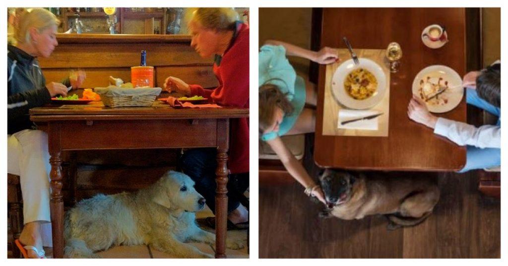 Bienvenidos los perros – Tendencia en restauración