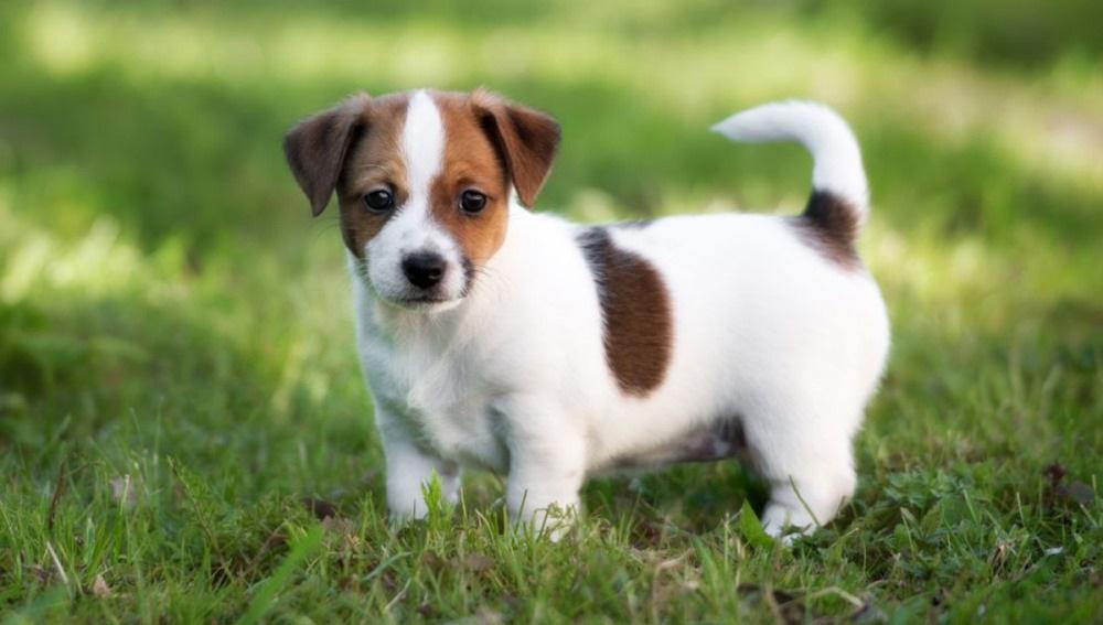 Bolsas-biodegradables-caca-perro