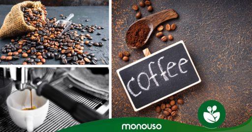 Conoce los tipos de café y domina al mundo