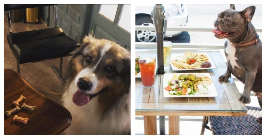 En Barcelona, estos restaurantes admiten perros