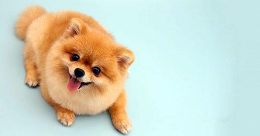 Heces de perro de tono amarillento
