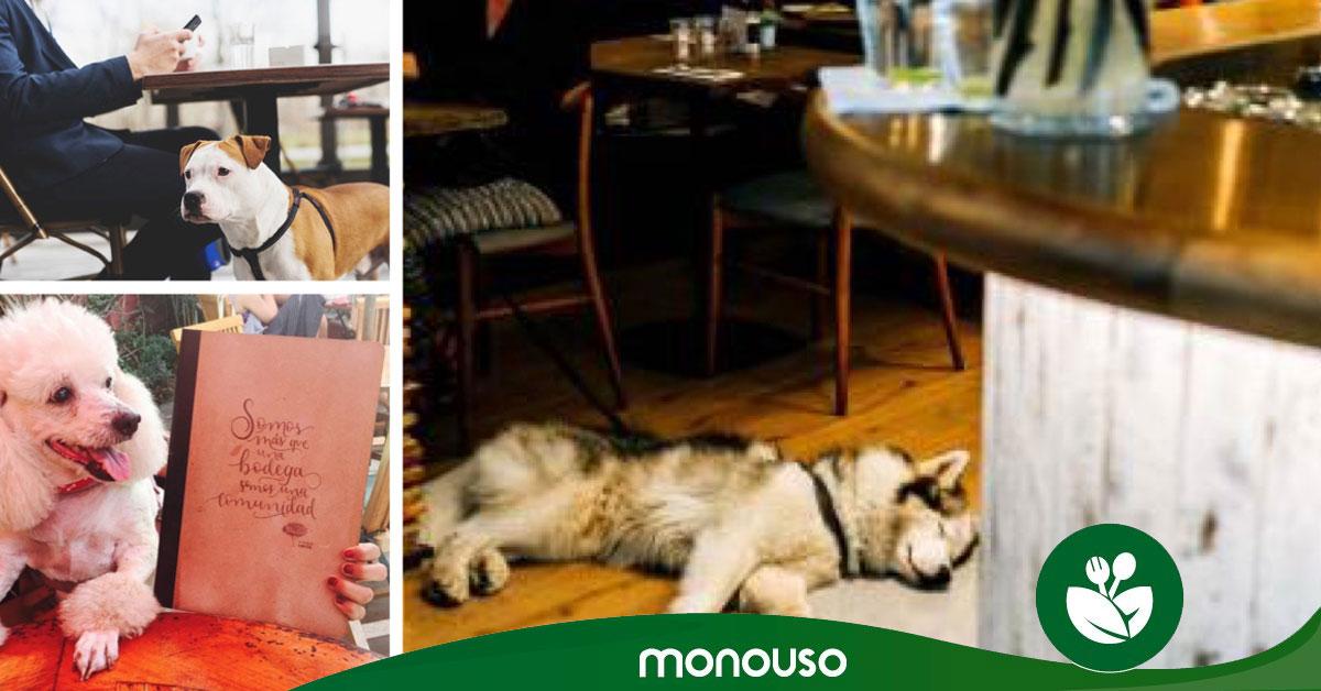 Restaurantes que admiten perros en España