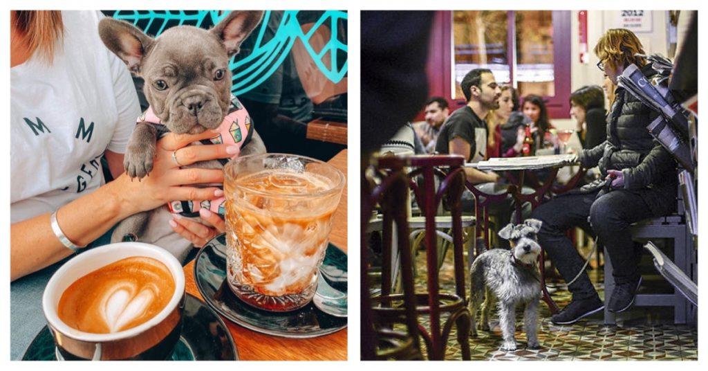 Restaurantes que admiten perros en Madrid