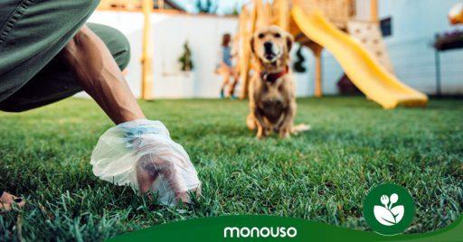 Tipos de heces de perros: reflejo de salud