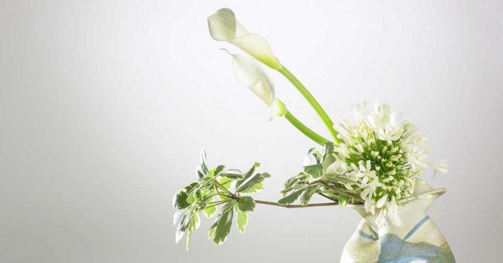 Utilidad de las flores preservadas para bares con plantas