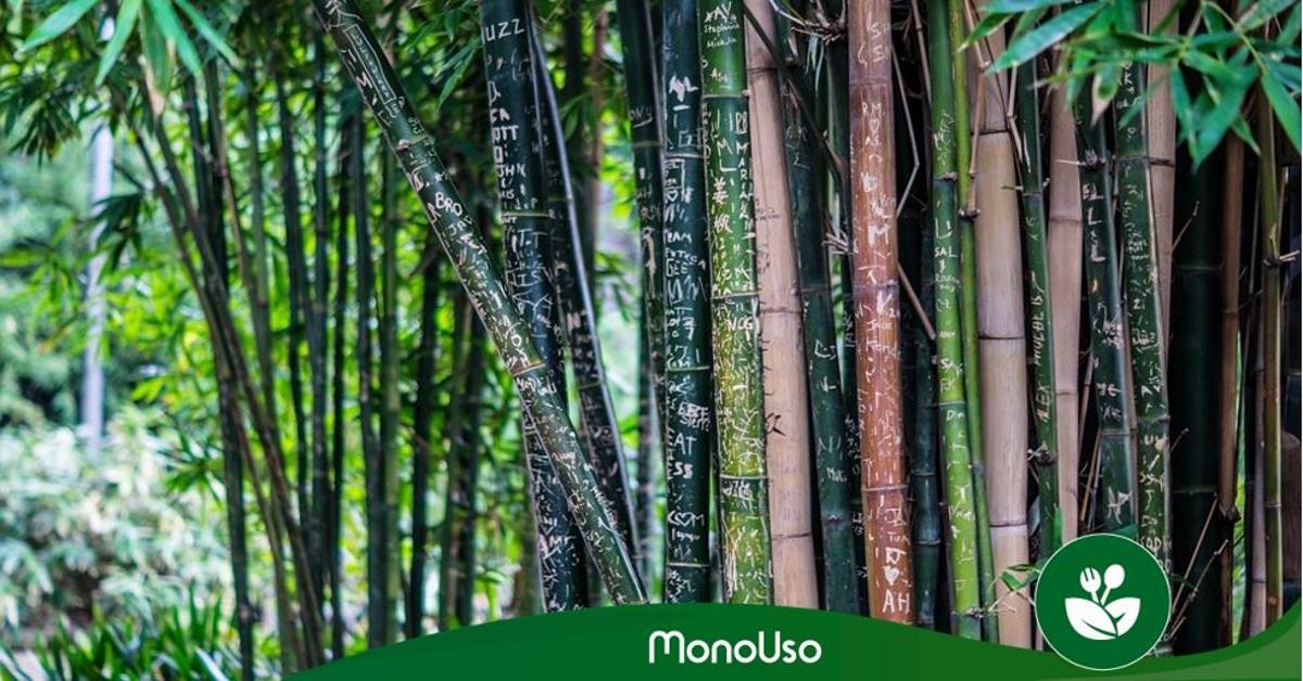 usos del bambú