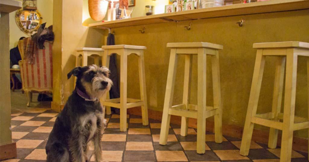 derecho-admision-mascotas